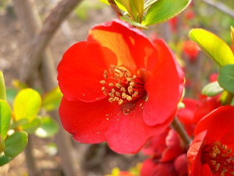 200803229赤穗かき 172-1.JPG