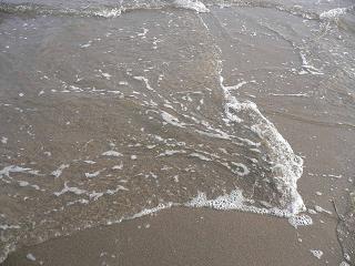 200803229赤穗かき 182-1.JPG